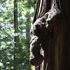 2009 08 12 No Cal Coast 009