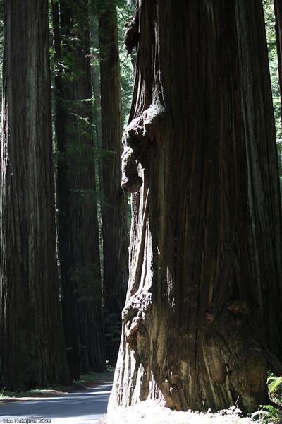 2009 08 12 No Cal Coast 007