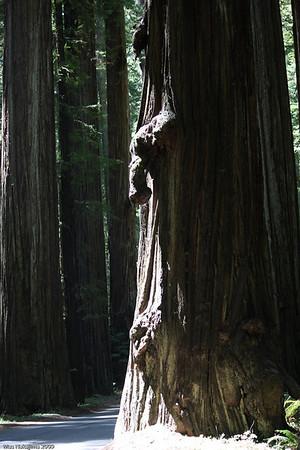 California-Oregon Coast