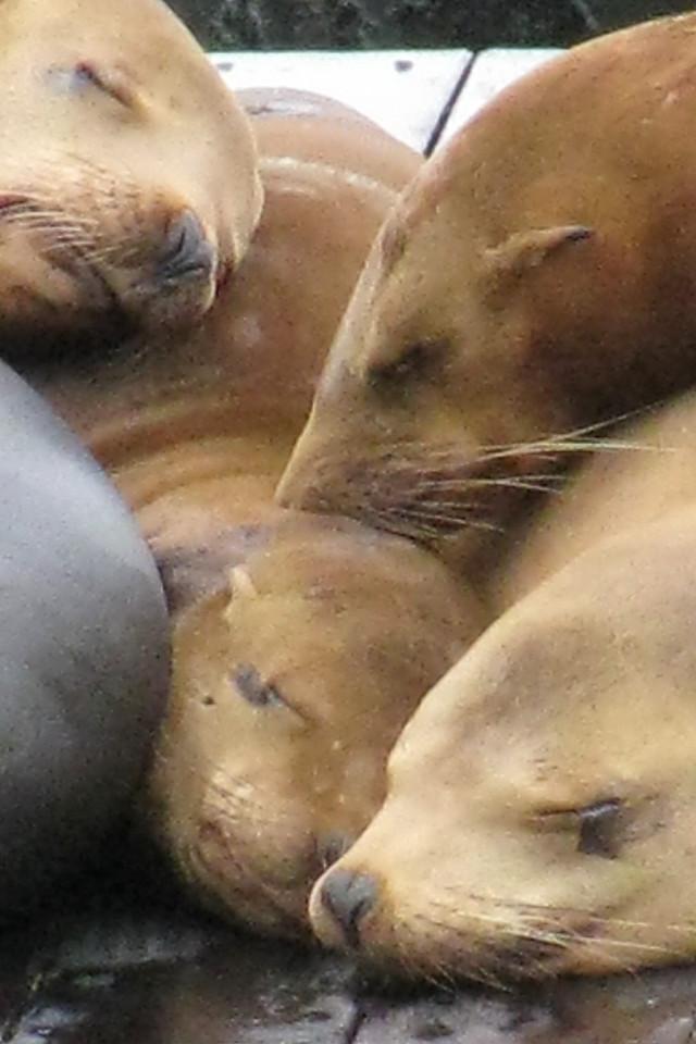 Sea lions lounging around Fisherman's Wharf.