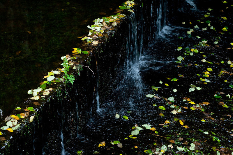 Fallen leaves trapped on dam at hatchery