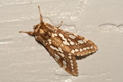 4164 Moth
