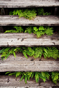 Steps and ferns at Lake House