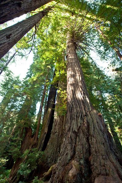 Prairie Creek Redwood Park