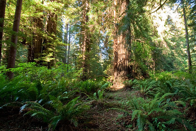 Prairie Creek Redwood Park