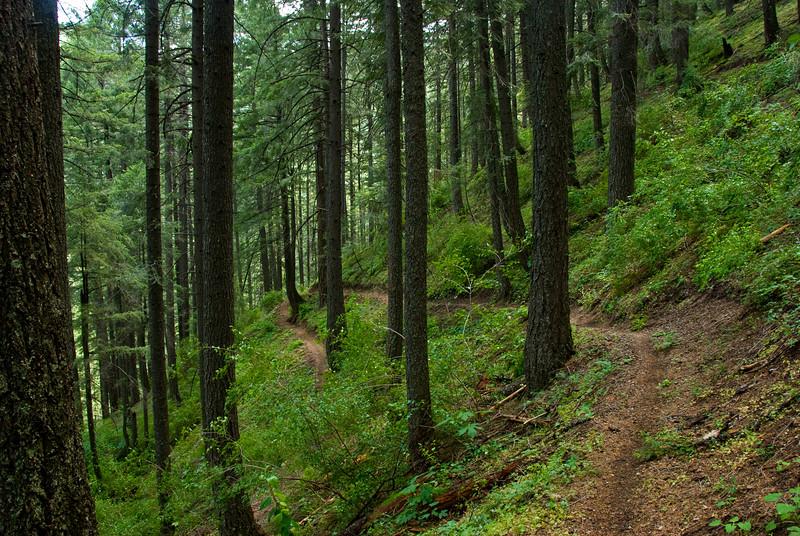North Yuba Trail - Downieville, CA - June 2009