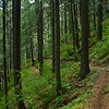 North Yuba Trail - Downieville, CA - June 2009