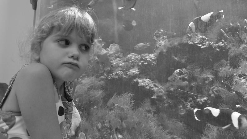 Maggie stares down Nemo