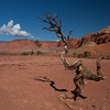 Dry, desolate view of the Capital Reef high desert plateau.