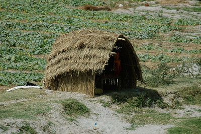 Behind Itmad-Ud-Daulah in Agra: it is dry season; one family uses this temporary island as a farm.