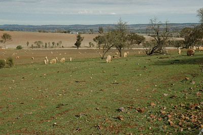 This is vast farm country, with sheep as far as you can see. New South Wales, Australia.