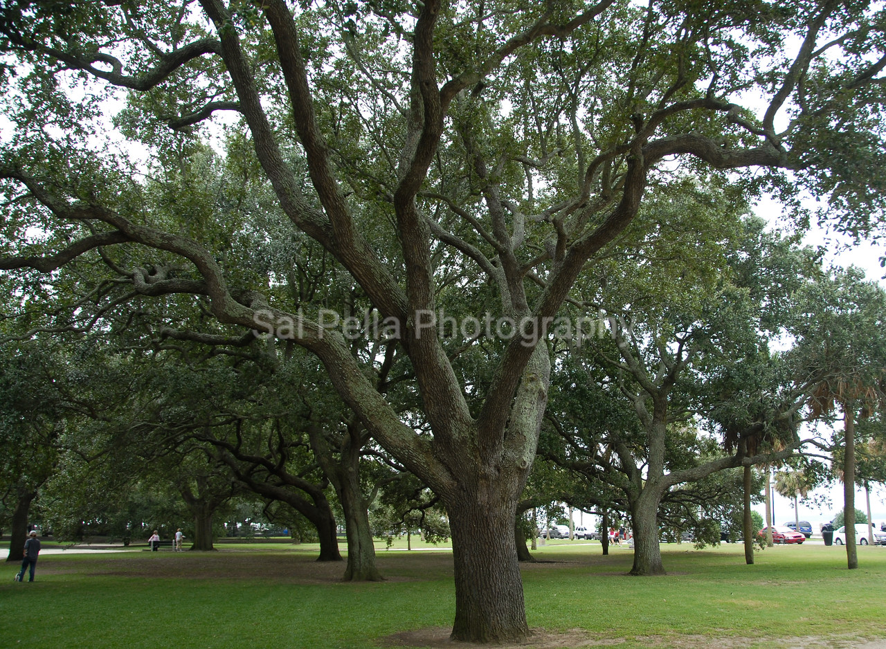 Charleston South Carolin