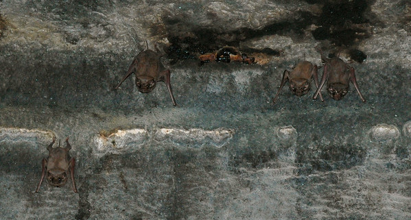 Ellora: bats currently reside in Cave 12, on the ceiling.