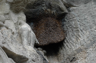 Ellora: a beehive - covered in bees - above a cave entry.