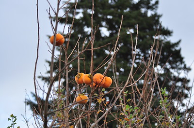 Some sort of orange fruit on one of the trees in the park.
