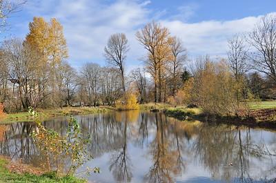Pretty reflective pond.