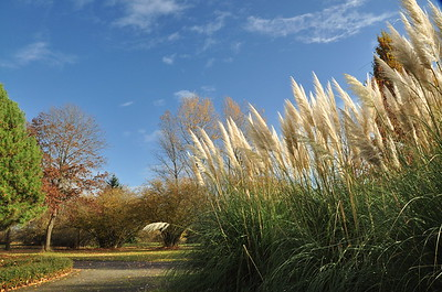 Tall grass bloomed out.