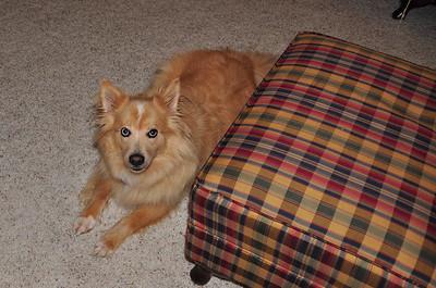 Kurt's dog, Alex.
