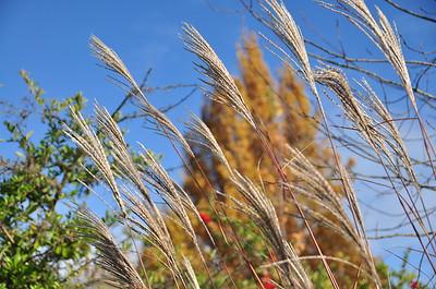 Looks like wheat!