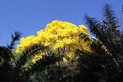 Gold Tree 2