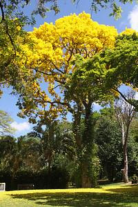Gold Tree 5