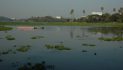 IIT Bombay: Lake Powai is, sadly, becoming clogged with water hyacinth.