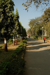 IIT Bombay: strolling through campus.