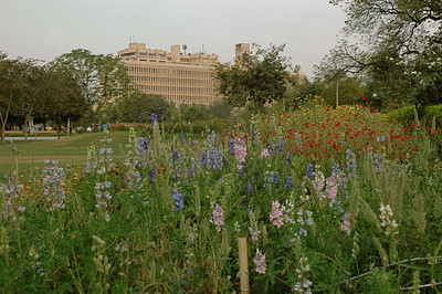 IIT Delhi: view from the gardens.