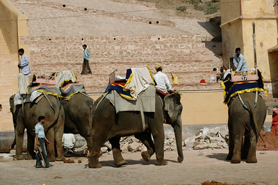 Amber Fort, Jaipur: at the base of the fort, a bustling elephant stand.
