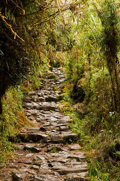 Paved stone path on the Inca Trail.