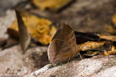 A butterfly at the Xcaret Ecological park.