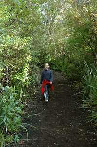 Mara at Rangitoto Island, Auckland, New Zealand. - most of the trail is forested.