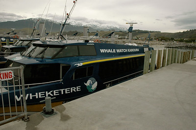 The Wheketere, our catamaran whale-watching ship. Kaikoura whale watching, New Zealand.