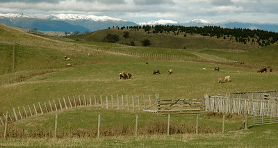 Snowcapped mountains provide a graceful backdrop for the many pastures.