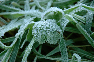 In low spots, frost had settled an hour before sunset.
