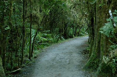 But the trail around the lake is a rainforest beauty.