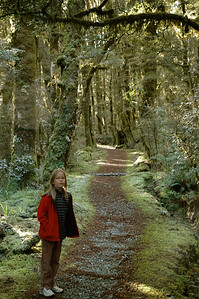 Mara walks through a frosty morning in the rainforest, Haast pass, South Island, New Zealand.
