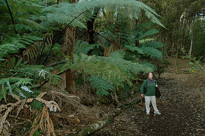 Pam with giant ferns on Rangitoto Island, outside Auckland, New Zealand.