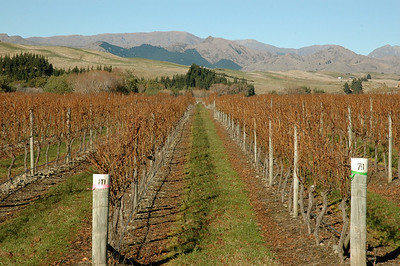 Marlborough county (near Blenheim) is known for its wine. New Zealand. South Island, east coast.