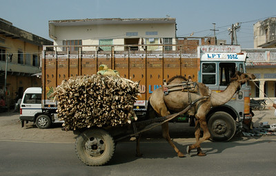 Rajasthan: old and new cargo haulers.