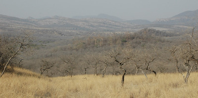 Ranthambore: a mixture of grassland and forest, in the dry season.
