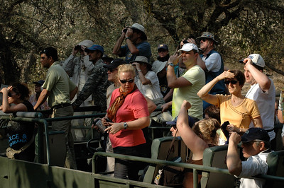 Ranthambore: homo touristicus, in 20-seat open buses.