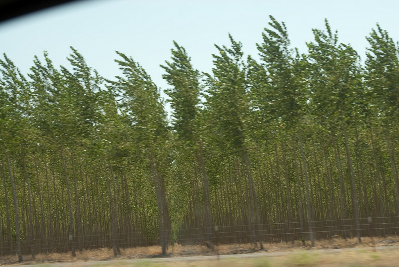 Tree farm.