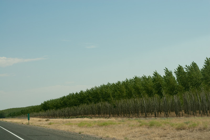 Miles and miles of tree farm. All different sizes.