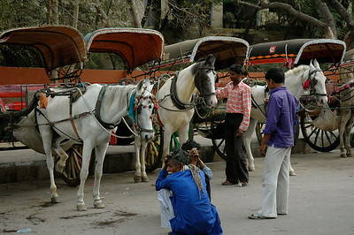 The Taj Mahal: only zero-emission vehicles are allowed to approach the Taj gates, including battery-op buses and these horse-drawn rickshaws.