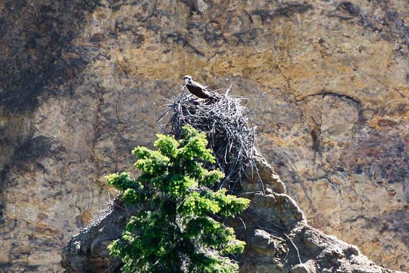 But an osprey nest was the main attraction