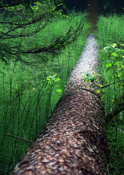 Z Boubínského pralesa.
