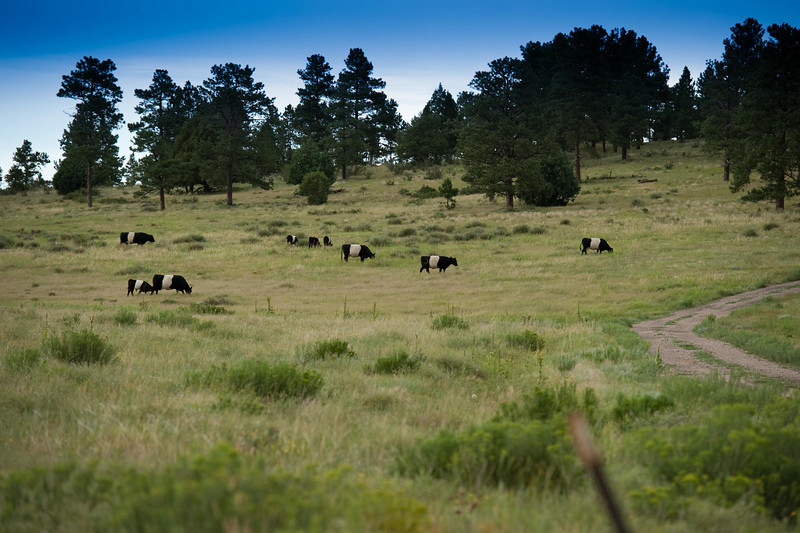 Ranch located between Limon and Franktown, CO