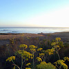 2010-08-22 Cayucos Beach 2