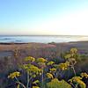 2010-08-22 Cayucos Beach 3